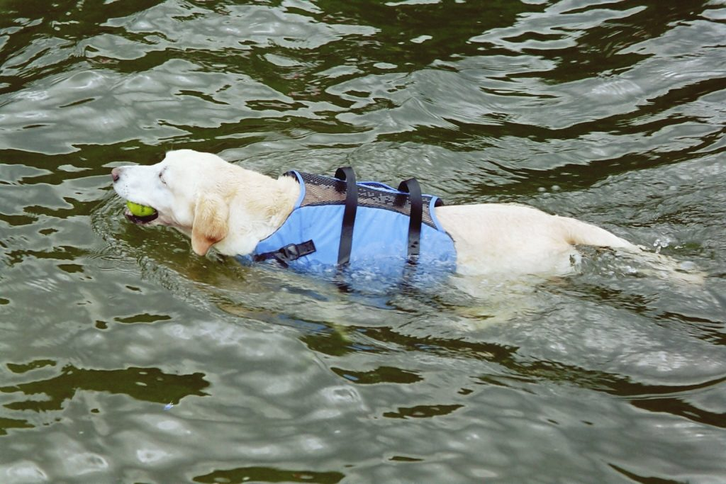 Even pets should stay safe with specialized flotation devices just for them